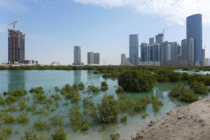 Still existing Mangroves on Al Reem Island in Abu Dhabi