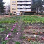 Example of community gardening at Boissy-Saint-Léger