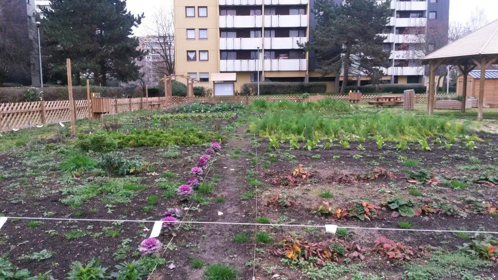 Example of community gardening at Boissy-Saint-Léger